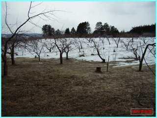 リンゴ畑_20110403.JPG