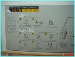 乳酪館_チーズ製造工程_2011-5-22.jpg