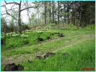 堆肥撒き2_2011-5-27.jpg