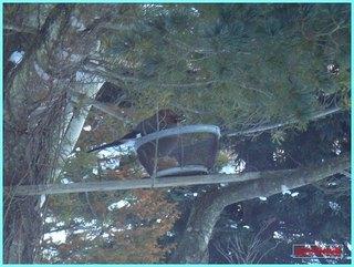 家の前のカケス_20120202.JPG