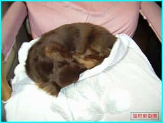 椅子で寝るクレア.JPG