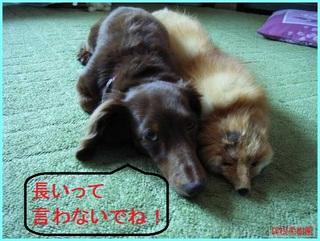 犬とキツネ.JPG