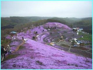 芝桜公園3_2011_5_22.JPG
