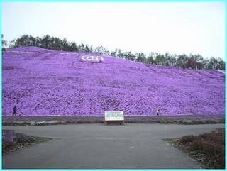 芝桜公園4_2011_5_22.JPG