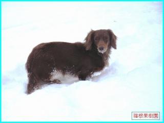 雪の中のクレア.JPG