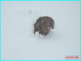 雪の中を歩くクレア.JPG