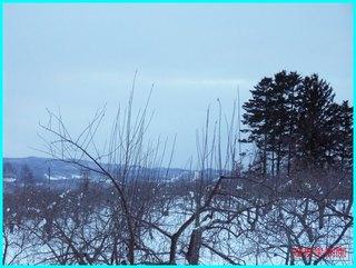 1月の果樹園_若松スキー場を望む.JPG