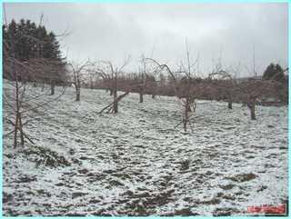 4月の雪2011-1.JPG