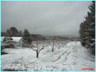 4月の雪2011-2.JPG