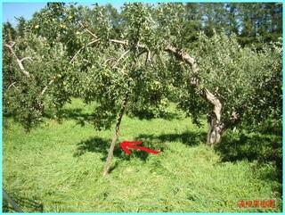 折れないように木で支え_2011-9-7.JPG